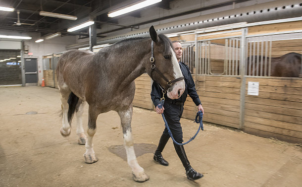 A man in TPS uniform walks in a stable holding a horse
