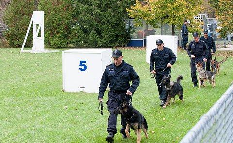 Men in uniform walk with 4 dogs in single file.