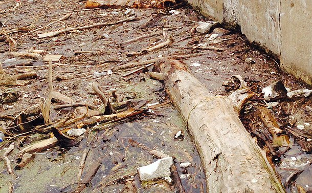 Water filled with garbage, vegetation and logs near a concrete wall