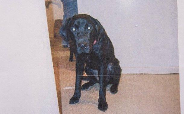 A black dog sitting in a hallway