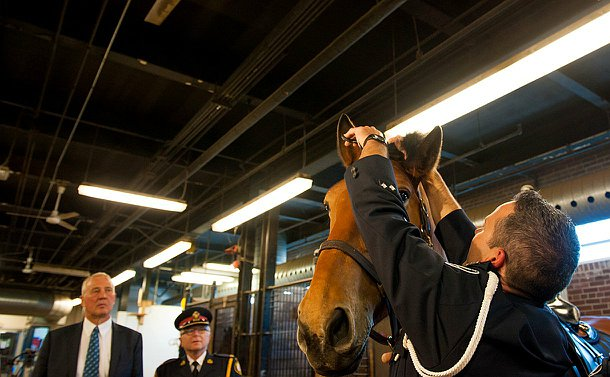 An officer in uniform reaching up to a horse and trimming it;s forelock.
