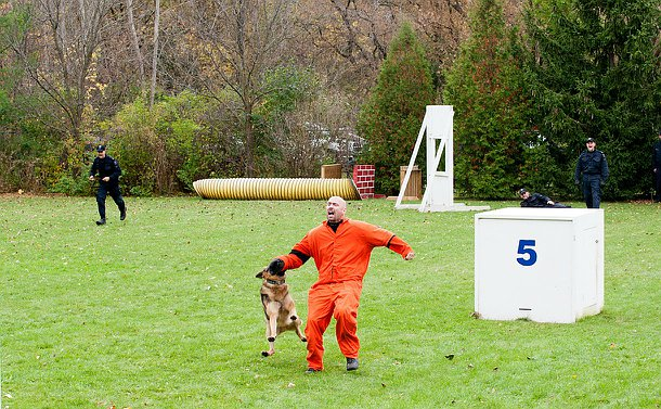 A man in an orange jump suit is screaming as dog bites on to his arm.