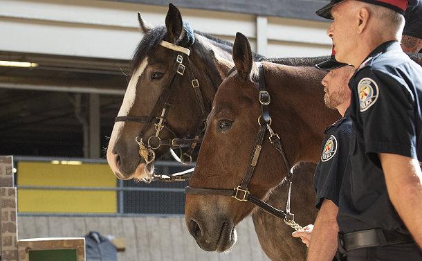 Two horses beside two men in TPS uniform