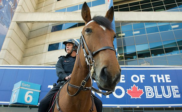 A horse looking down at the camera with a uniformed officer riding him.