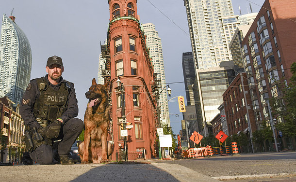 A man in a police uniform kneels next to a German Shepherd dog, against a background of tall city buildings