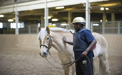 A boy strokes a horse