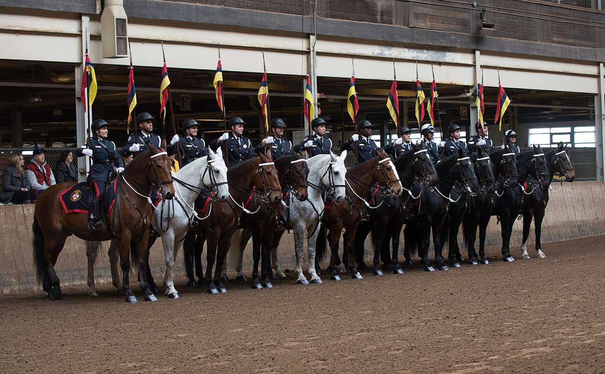 A dozen people in police dress uniform on horses