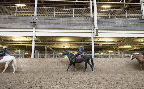 A boy atop a horse reaches backwards
