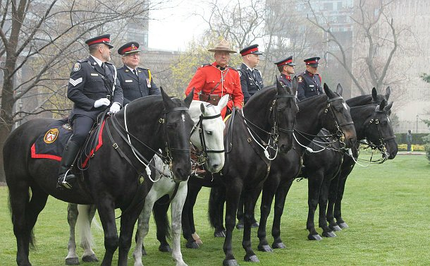 A group of police officers on horses waiting for the ceremony to begin