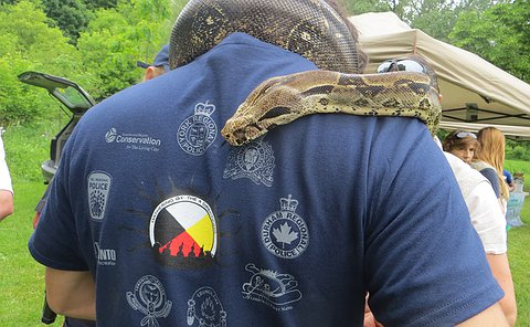 A snake wrapped around a person's neck viewed from behind