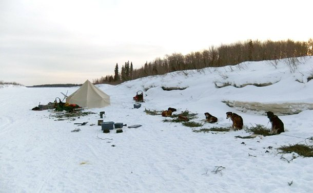 A tent alongside dogs tied to posts