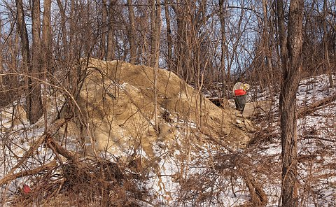 A pile of the dirt in a wooded area