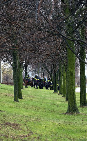 A group of men in TPS uniform on horseback cross a double row of trees