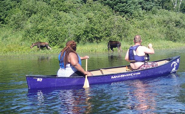 Two people in a canoe near moose